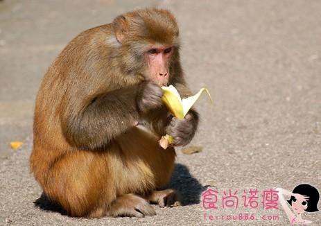 为你解开千古之谜:猴子为什么不吃香蕉