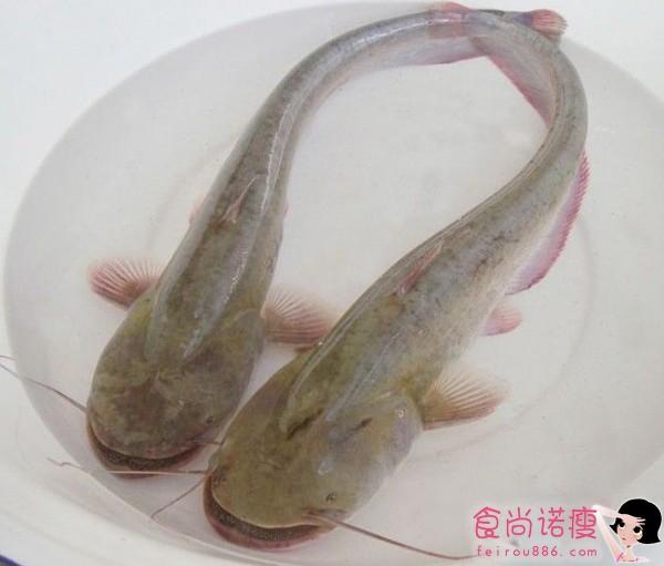 """儿童吃鱼应吃""""和尚""""鱼"""